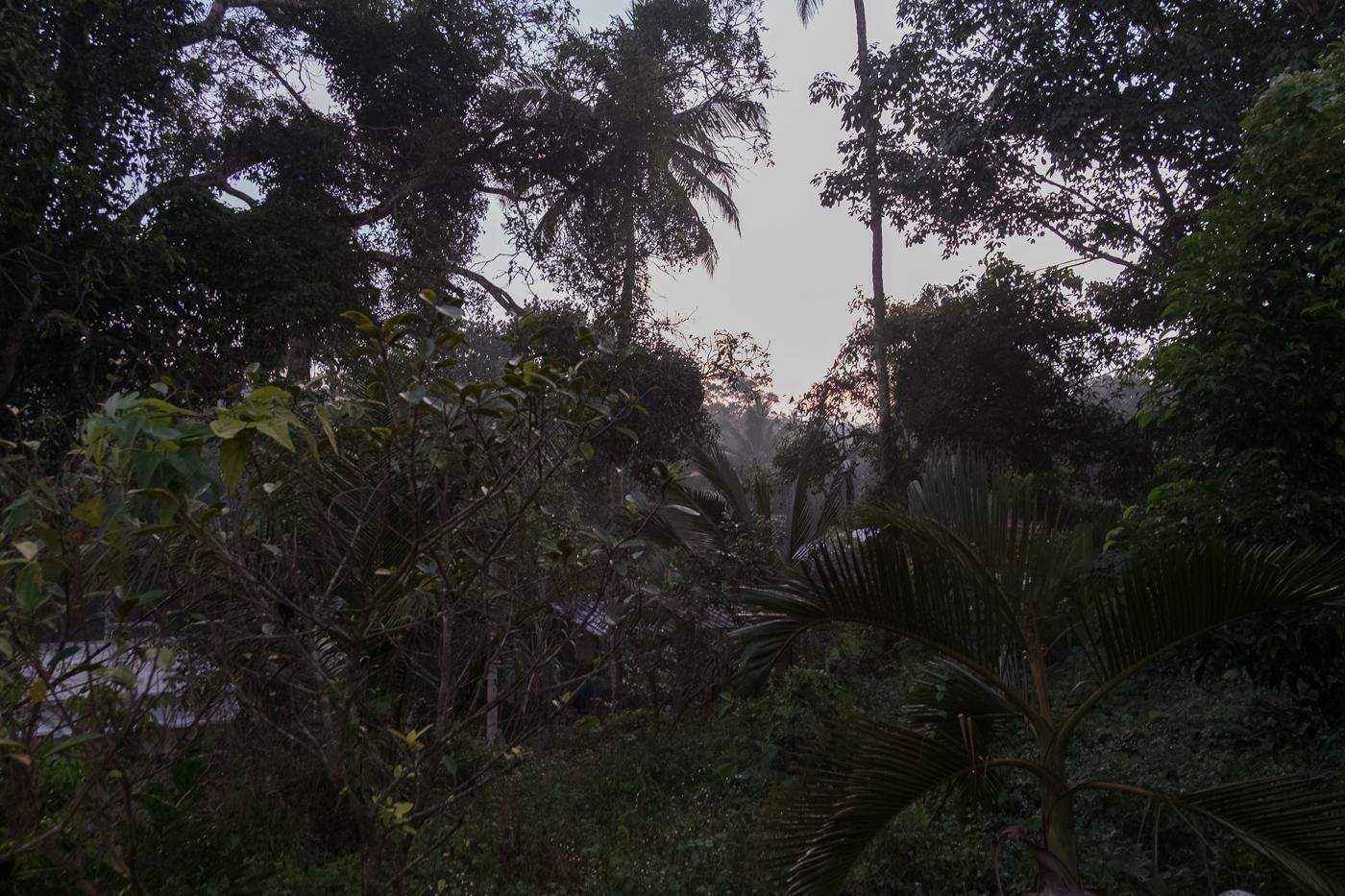 ayurveda-8760